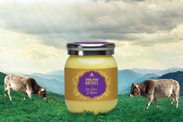 A2 BADRI COW GHEE BENEFITS